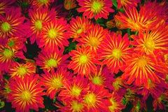 kwiat pomarańczy abstrakcyjna Obraz Royalty Free