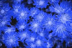 kwiat pomarańczy abstrakcyjna Fotografia Stock