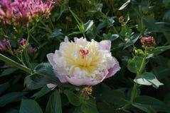 Kwiat prawda Obrazy Stock