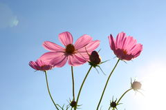 Kwiat przeciw niebieskiemu niebu obrazy royalty free
