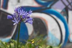 Kwiat przed graffiti Zdjęcie Royalty Free