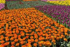 Kwiat przy kwiatu przedstawieniem przy Hong Kong Obraz Stock