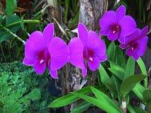 Kwiat przy wata uderzenia phra fotografia royalty free