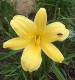 kwiat pszczoła Fotografia Royalty Free