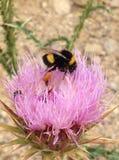 kwiat pszczoła Obraz Royalty Free