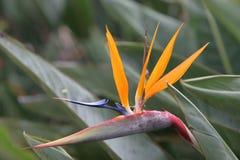 kwiat ptaka do raju zdjęcie stock