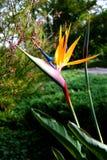 kwiat ptaka do raju Obraz Stock