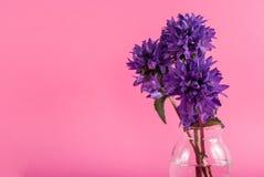 Kwiat purpury barwią w wazie z wodą na różowym tle z przestrzenią dla teksta Zdjęcie Stock