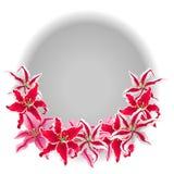 Kwiat różowe leluje odizolowywać na białym tle Barwione wektorowe ilustracje Obraz Stock