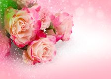 Kwiat różowe róże na różowym tle Fotografia Royalty Free