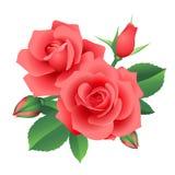 Kwiat róże Fotografia Stock