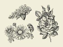 Kwiat Ręka rysujący nakreślenia dogrose, rosehip, dziki wzrastał, ptasia wiśnia, chryzantema również zwrócić corel ilustracji wek ilustracji