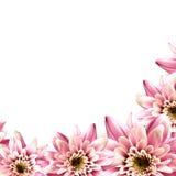 kwiat rama fotografia stock