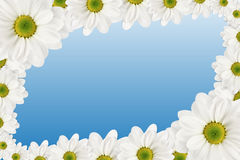 kwiat rama Zdjęcia Stock