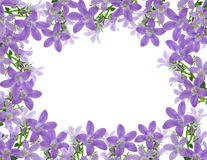 kwiat rama zdjęcia royalty free
