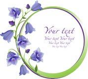 kwiat rama Bukiet kampanuli dzwon odizolowywający Obrazy Stock