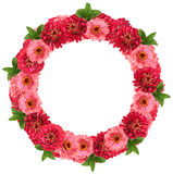 Kwiat rama - wianek Zdjęcie Royalty Free