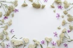 Kwiat rama wildflowers na białym tle Mieszkanie nieatutowy, odgórny widok kwiecisty mockup literowania szablon Obraz Royalty Free