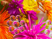 KWIAT refrakcja 10 zdjęcia stock