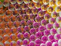 KWIAT refrakcja 5 obraz stock