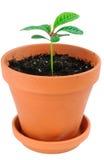 kwiat rośliny garnka potomstwa zdjęcie stock