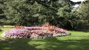 Kwiat rośliny w parku i łóżka zdjęcie wideo