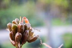 Kwiat roślina w ogródzie Zdjęcie Stock