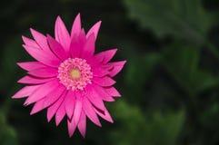 Kwiat roślina w ogródzie Zdjęcie Royalty Free