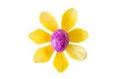 Kwiat robić fiołkowy Easter jajko koloru żółtego tulipanowy okwitnięcie i Fotografia Royalty Free