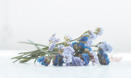 Kwiat robi sensowi Zdjęcia Royalty Free