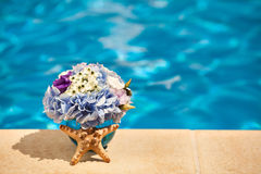 Kwiat rozgwiazdy skorupy basen Obraz Royalty Free