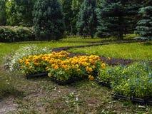 Kwiat rozsady gotowe dla zasadzać w wiośnie obrazy royalty free