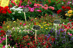 kwiat rynku Obraz Stock