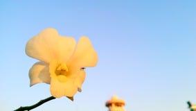 Kwiat samotnie Zdjęcie Royalty Free