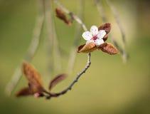 Kwiat samotnie Obrazy Royalty Free