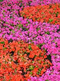 kwiat schematu Fotografia Royalty Free
