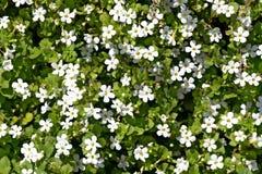 kwiat schematu Obrazy Stock