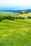 Kwiat segregujący w Tuscany krajobrazie, Włochy zdjęcie royalty free