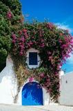 Kwiat Sidi Bou Powiedział Obrazy Stock