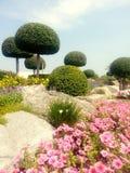 Kwiat - skała - drzewo: Współzależność Fotografia Stock