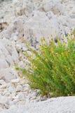 kwiat skały Obraz Stock