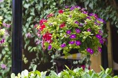 kwiat spławowa waza Fotografia Stock