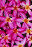 kwiat spławowa woda Fotografia Royalty Free