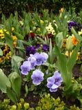 kwiat spać fotografia stock