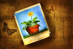 kwiat starego zdjęcia Zdjęcia Stock