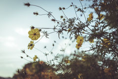 Kwiat stosownie i drzewo w ogródzie Zdjęcie Stock