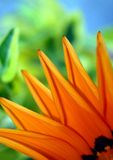 kwiat szczególne Obraz Royalty Free