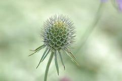 kwiat szczególne Zdjęcia Royalty Free