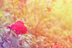 kwiat tła abstrakcyjne Kwiaty robić z kolorów filtrami Fotografia Royalty Free