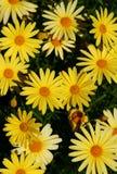 kwiat tło zdjęcia royalty free
